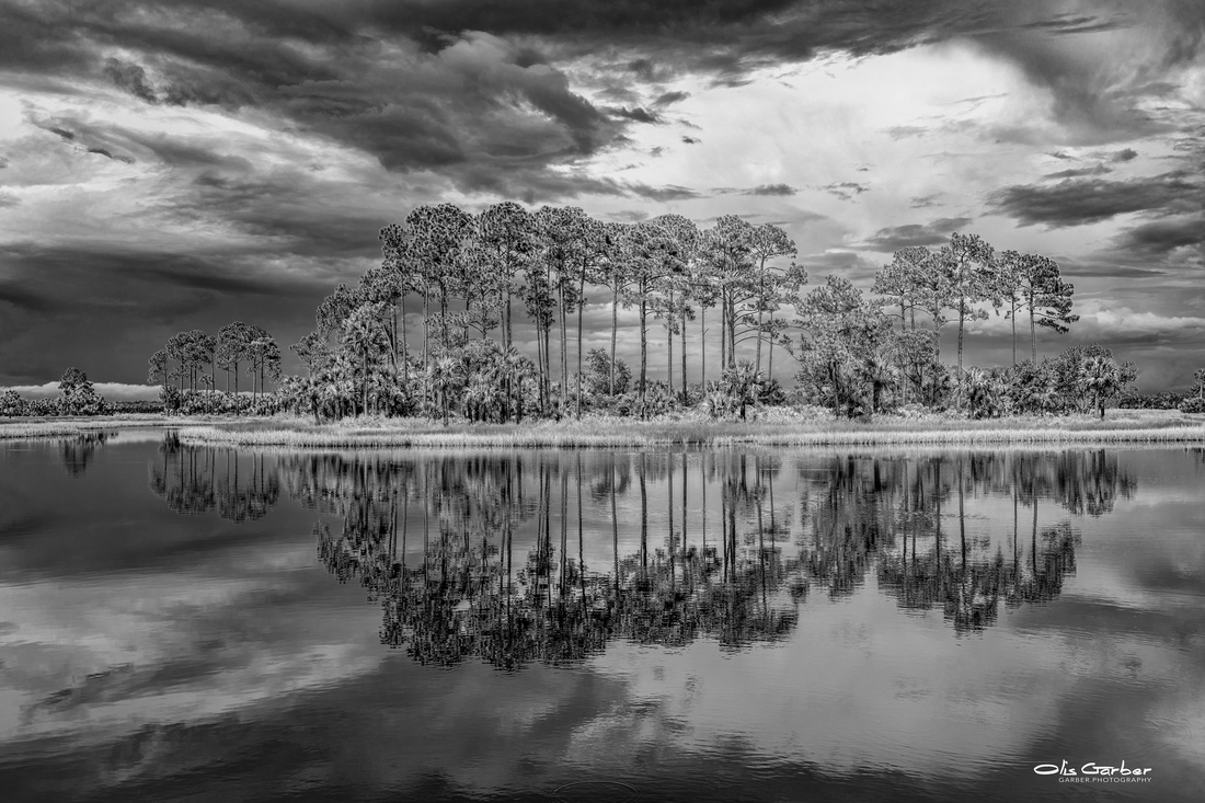 Pines, Water and Sky - B&W